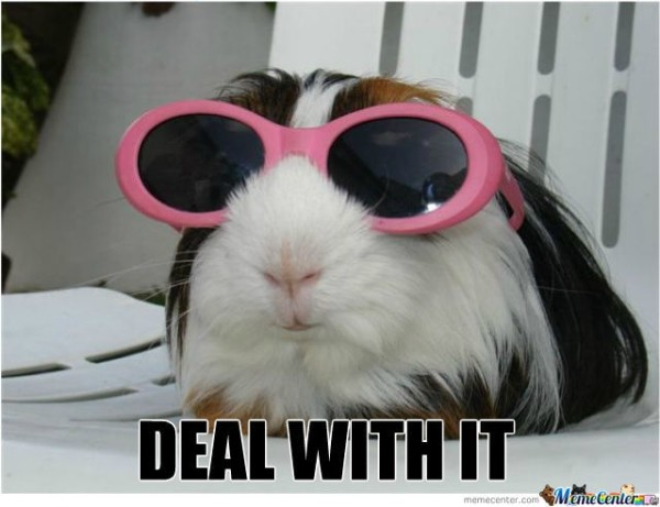 Funny Guinea Pig - Meme Center