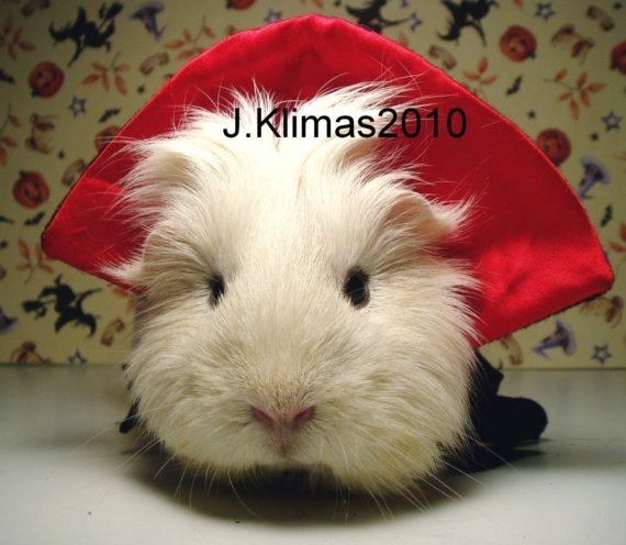 GUINEA PIG VAMPIRE Funny Kitschy and Playful