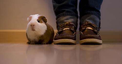 new kicks and a pig by Katherine McAdoo