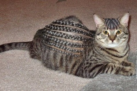 Googled Braids, was not dissapointed