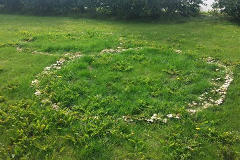 I found rings of mushrooms on the lawn