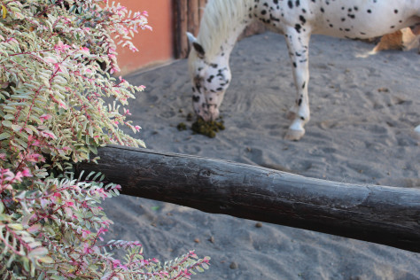 I thank my camera for focusing on the plant and not the horse sniffing his poop.