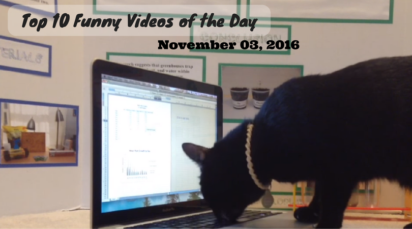Top 10 Funny Videos Of The Day November 03 2016