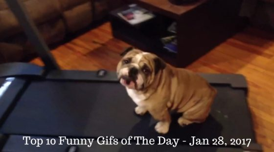 Top 10 Funny Gifs of The Day – Jan 28, 2017