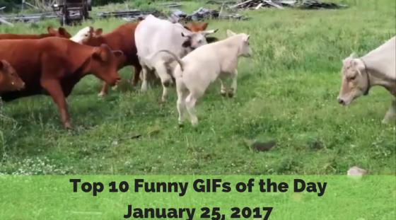 Top 10 Funny GIFs of the Day – January 25, 2017
