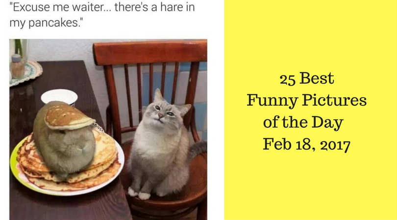25 best funny pictures of the day feb 18 2017 for Top pictures of the day