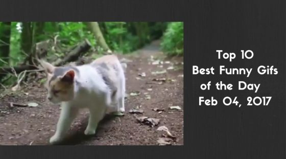 Top 10 Best Funny Gifs of the Day – Feb 04, 2017