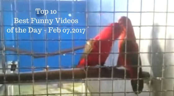 Top 10 Best Funny Videos of the Day – Feb 07,2017
