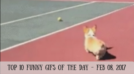 Top 10 Funny GIFs of the Day – Feb 08, 2017