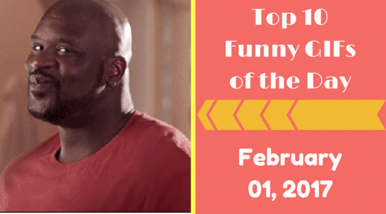 Top 10 Funny GIFs of the Day – February 01, 2017