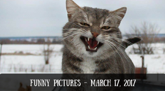 Funny Pictures – March 17, 2017